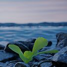 Lonely plant between stones by Colin Behrens