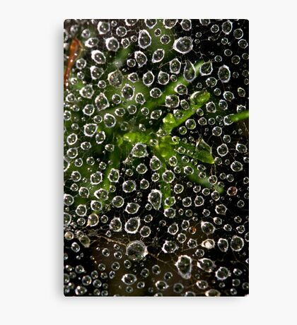 Web and Water Canvas Print