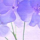 Violet II by Rebecca Cozart