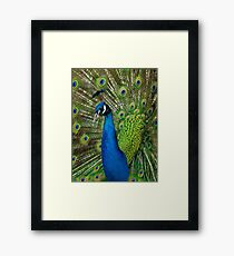 Peacock close up Framed Print