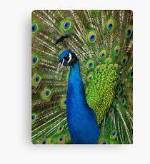 Peacock close up Canvas Print