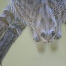 Tiny spiders head by columboola