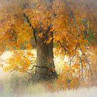 Autumn splendor in the meadow by JOSEPHMAZZUCCO