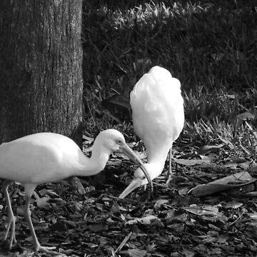 Ibis in The Park by LeonidasBratini