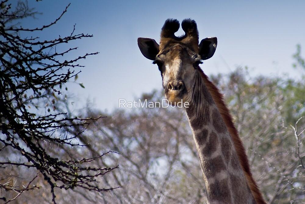 Giraffe - Head Shot by RatManDude