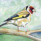 Goldfinch by Liz Mattison