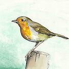 Robin by Liz Mattison
