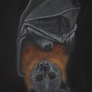 """Siegfried"" the Grey-Headed Flying Fox by NyreeMason"