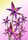 Eastern Queen of Sheba Orchids by Leonie Mac Lean