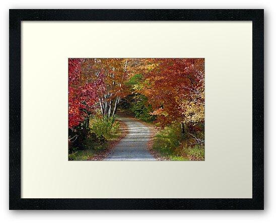 New Hampshire Foliage 2008 #8 by Len Bomba