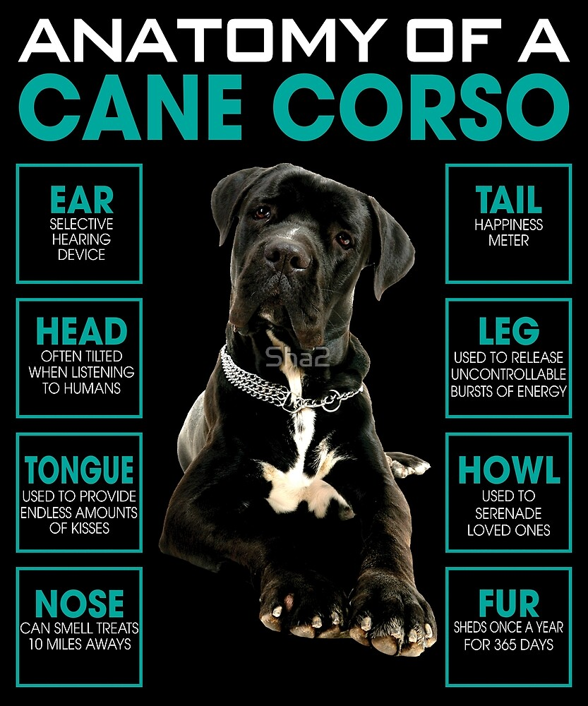 Anatomy Of A Cane Corso For Dog Lovers By Sha2 Redbubble
