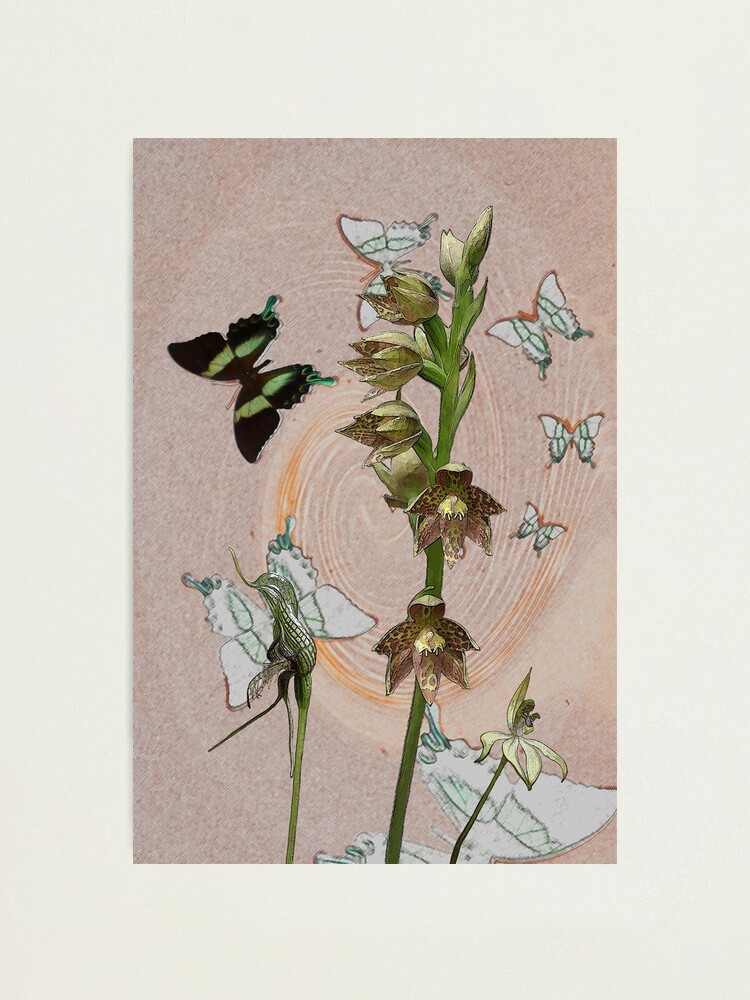 Alternate view of Butterflies & Orchids 3 Photographic Print