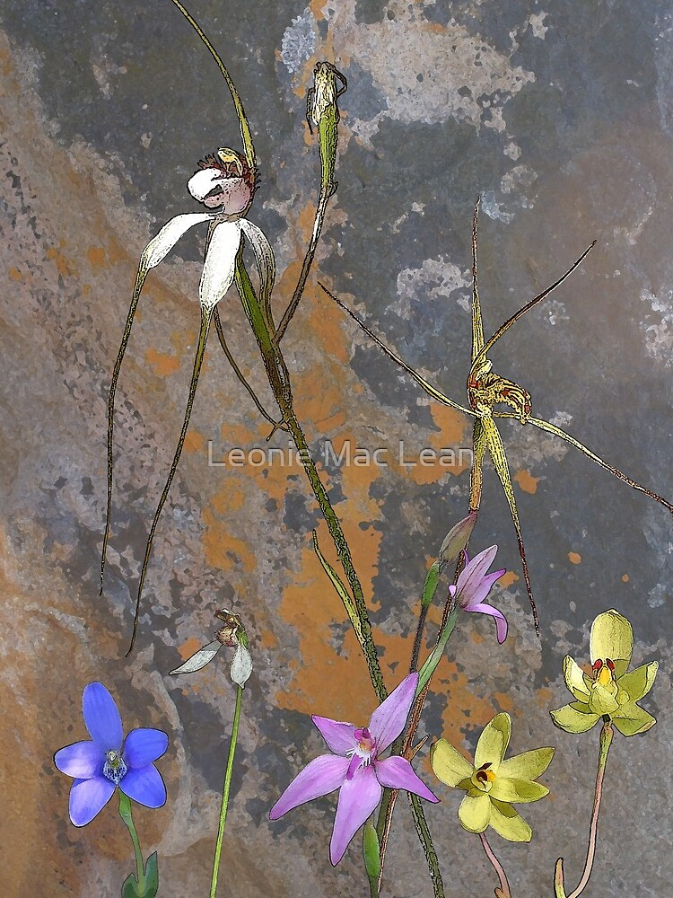 Meelup Orchids with Rock by yallmia