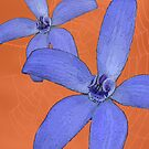 Silky Blue Orchid with Web by Leonie Mac Lean