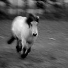 Its all a blur by Mitch  McFarlane