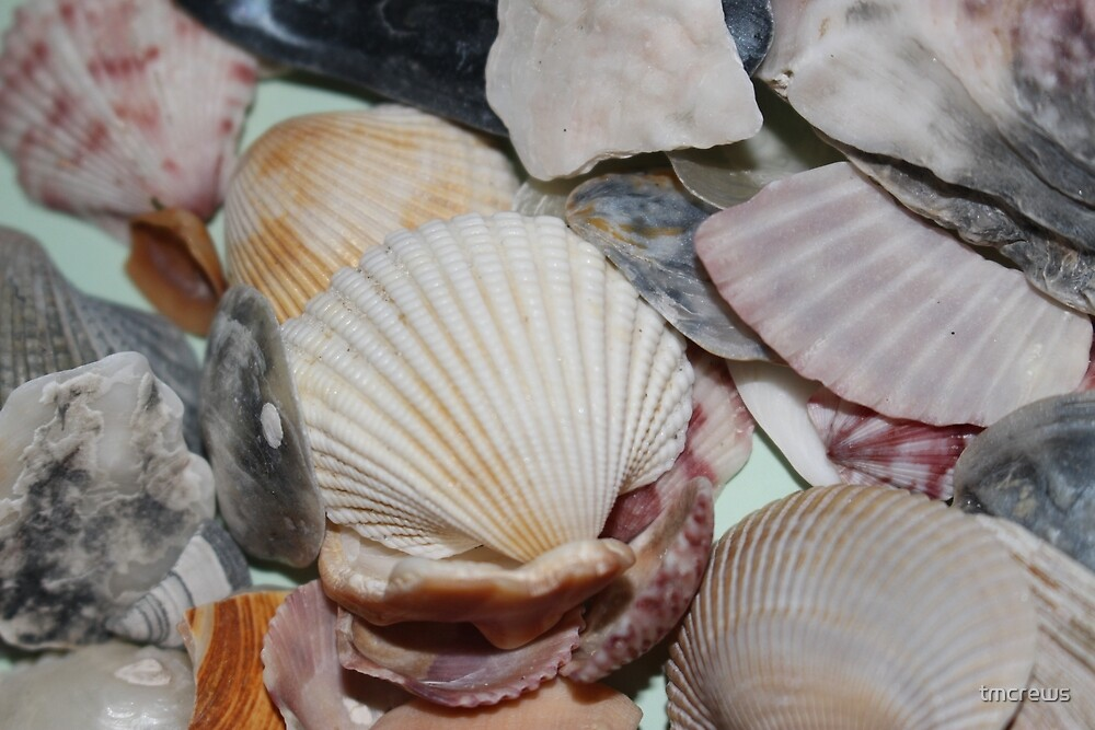 Shells by tmcrews