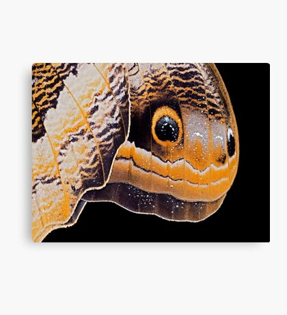 Butterfly or Snake Head Canvas Print