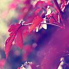 dreaming of fall . holding on to summer by sara montour
