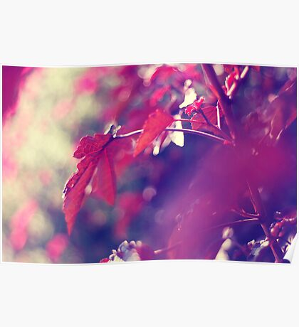 dreaming of fall . holding on to summer Poster