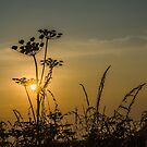 Suffolk sun by Acutogirl