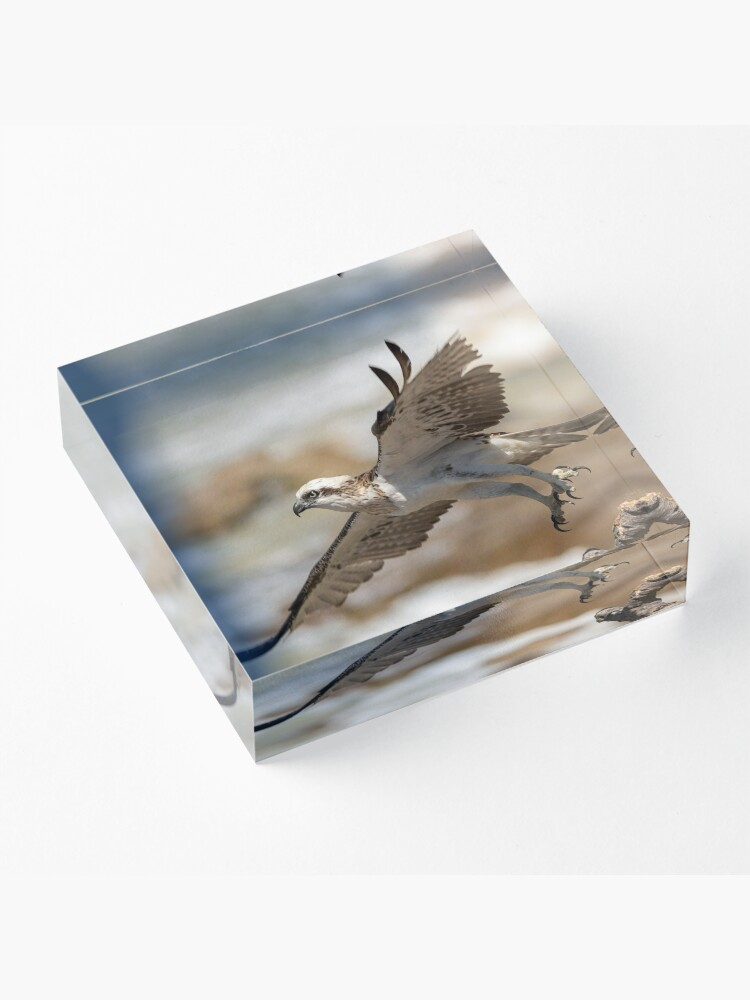 Alternate view of Osprey Takes Flight, Sunshine Coast Acrylic Block