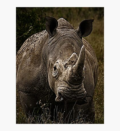 White Rhino - Face to Face Photographic Print