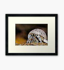 Hermit Crab - Coconut Crab Framed Print