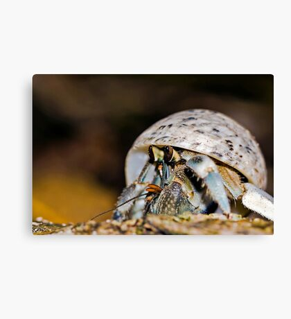Hermit Crab - Coconut Crab Canvas Print