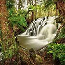 Lockwood Creek Falls, Tasmania by Kevin McGennan