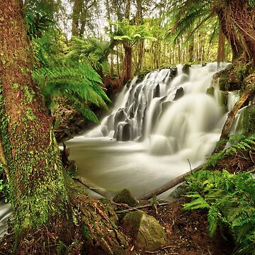 Lockwood Creek Falls, Tasmania by kevinmcgennan