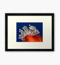 False Nemo Framed Print