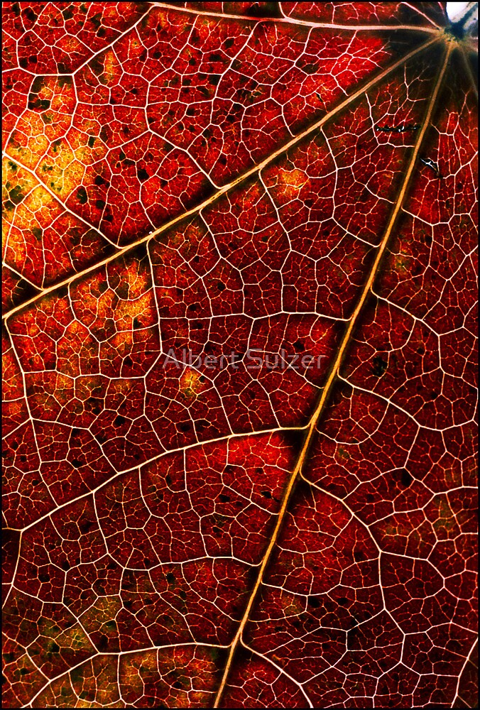 Colours and Patterns of Nature by Albert Sulzer