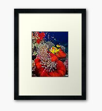 Anemone City Framed Print