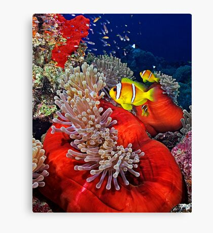 Anemone City Canvas Print