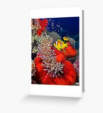 Anemone City Greeting Card