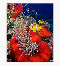 Anemone City Photographic Print