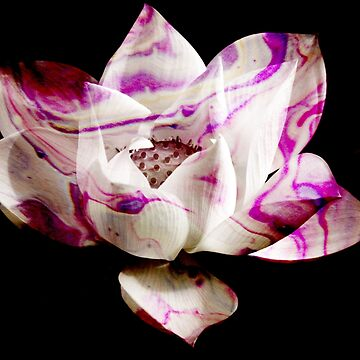 Marbled Lotus - Photography & Acrylic Painting by Fluid Nature by vmajzlik