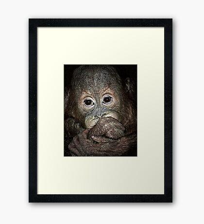 Orang Utan Baby Portrait Framed Print