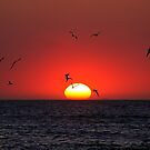 Sunset & Birds by Henry Jager