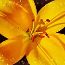 Decorative Yellow Lily  by hurmerinta