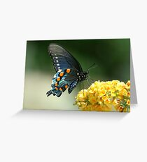 Butterfly, Pipevine Swallowtail, Battus philenor Greeting Card