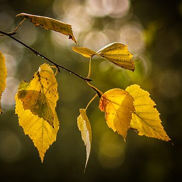 Colorful autumn by Blauer