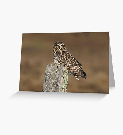 Asio Flammeus Greeting Card
