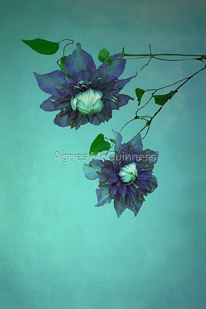 Clematis by Agnes McGuinness