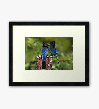 Jay Peck Framed Print