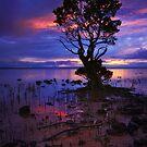 Ancient Mangrove Tenby Point by Mark Shean