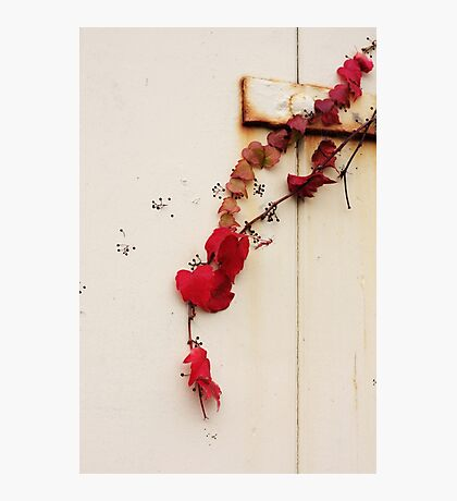 Red ivy Photographic Print
