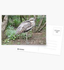 Bush Stone Curlew 2 Postcards
