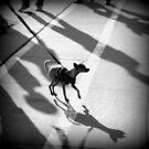Hund und Schatten von Marianna Tankelevich
