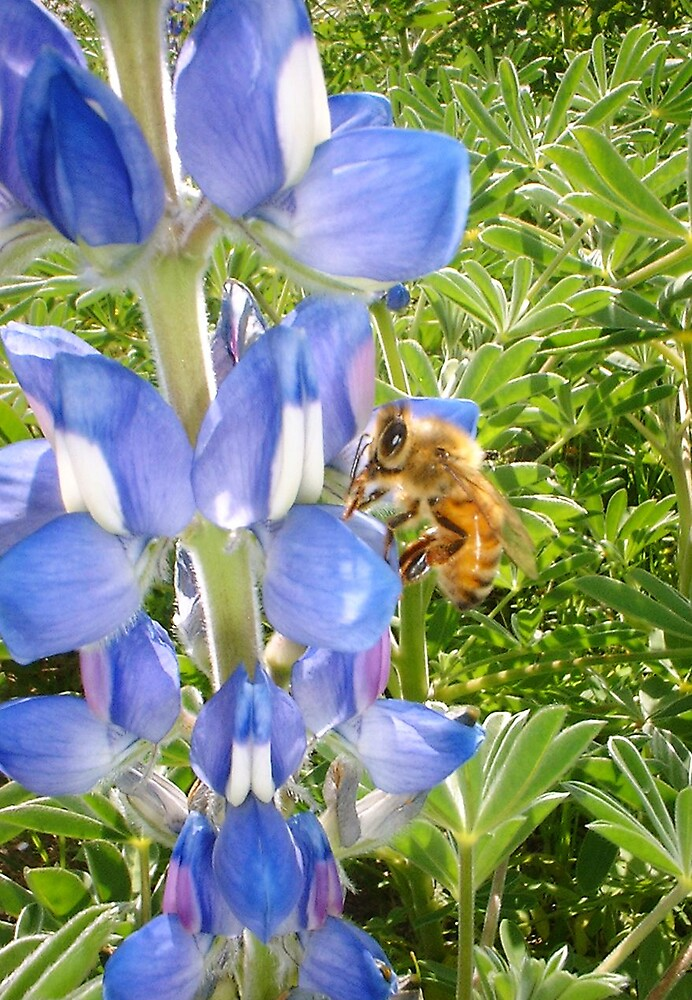 Bee With Wild Lupins by robertemerald